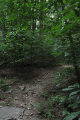 forest path (Molly Des Jardin) Tags: park trees usa brown green leaves rock stone forest rocks state pennsylvania earth path stones rocky dirt 2014 susquehannock drumore 43215mm