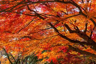 紅葉 - 南禅寺 / Nanzen-ji Temple