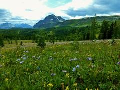 7-098 (Gnarlene) Tags: flower hiking banff healypass monarchramparts
