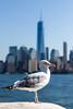 Escaped from crazyness (Titom1000rr) Tags: world nyc newyorkcity sea newyork bird canon river liberty island one ellis manhattan seagull worldtradecenter center 7d trade ellisisland canonfrance oneworldtradecenter