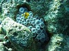 My Anenome, Go Away! (someofmypics) Tags: water sport underwater outdoor turtle redsea egypt bikini diver wetsuit triggerfish naamabay hiltonfayrouz anthiasdivers sinaicollege