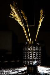 Momentos (Paulo Mrcio Cassini) Tags: flower night flash decoration highlights vela trigo detalhe lamparina culturamarroquina