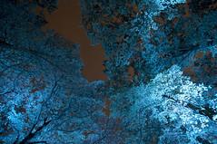 Glow 2015 Eindhoven (stfnvd) Tags: blue trees light tree netherlands azul licht bomen nikon blauw glow angle nacht wide nederland thenetherlands eindhoven boom nikkor avond 1024 d300s