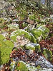 Winterspaziergang Mörschieder Burr_0007 (AndreasHerbert) Tags: mörschied mörschiederburr nationalparkhunsrückhochwald