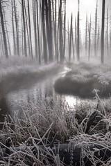 Frosty Sunrise (Patty Bauchman) Tags: mist nature landscape frost steam wyoming yellowstonepark earlymorningsun bobbysoxtrees