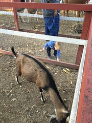 """Paul Tries to Feed a Goat • <a style=""""font-size:0.8em;"""" href=""""http://www.flickr.com/photos/109120354@N07/22928833350/"""" target=""""_blank"""">View on Flickr</a>"""