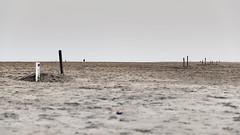Am I Losing Touch? (○gus○) Tags: nikond700 240700mm ƒ28 11000 mare sea spiaggia beach uomo man sabbia sand farewell odyssey florencethemachine shiptowreck elements earth ʂ
