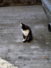 Cucciolo (IlGiomba) Tags: cats fusa gattini animalidacompagnia