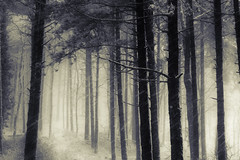 Foresta del Pratomagno (M K S v i d e o - p h o t o g r a p h y) Tags: winter italy snow forest tuscany inverno bosco foresta pratomagno valdarno forst monocromie marksoetebierphotography