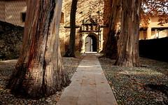 Monasterio de Yuste - Cáceres (Garciamartín) Tags: monasterio monumento arquitectura arte árboles tronco eucalipto portada cuacosdeyuste cáceres extremadura españa europa lavera