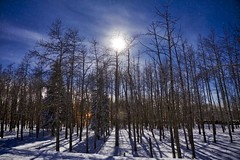 Random forest winter night (John Andersen (JPAndersen images)) Tags: alberta aurora farm horsecreekrd moon night road rural shadows stars watervalley