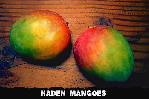 "Haden Mangoes • <a style=""font-size:0.8em;"" href=""http://www.flickr.com/photos/139081453@N03/31520347332/"" target=""_blank"">View on Flickr</a>"