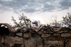 Bon Appetit (Rafael Lopezeta) Tags: gato úbeda andalucia abandoned abandonedplaces abandonedbuildings fujifilm fuji fujixt1 fujifilmxt10 fujinon xc1650mmf3556 ois ii