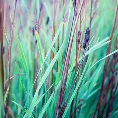 Three From the Garden - Kodak Ektachrome 100 exp* (magnus.joensson) Tags: sweden swedish skåne sölvesborg garden green e6 hasselblad 500cm zeiss planar 100mm cf kodak ektachrome 100 exp 2005