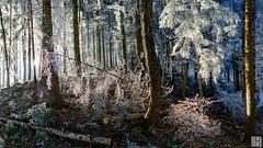 snow white forest (gregor H) Tags: feldkirch vorarlberg liechtenstein at austria winter forest wood cold sun hoar frost white panorama chaos christmas pure splendit glistening light space pprowinner