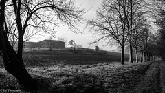 20161231Brouillard-1 (loflol) Tags: coteaux brouillard brume ancien grain