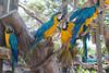 Family Dinner, Afterwards (OneEighteen) Tags: cartagenadeindias colombia parrots guacamayos humor