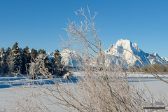 Mount Moran Frost (kevin-palmer) Tags: grandtetonnationalpark nationalpark wyoming moran december newyearseve winter cold snowy snow white clear sunny sunshine blue sky mountmoran frosted frost frosty oxbowbend nikond750 tamron2470mmf28 snakeriver ice icy frigid