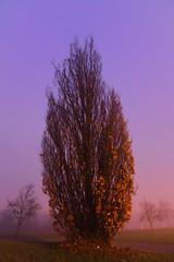 MD_040 (亞雲 Ed Lee) Tags: nikon 7100 tokina 1228mm morning dawn fog milne dam park tree pitch dark foggy depthoffield outdoor long exposure bokeh contrast winter cold