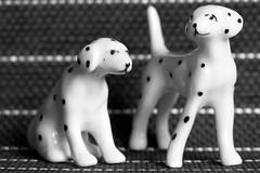 Dots All! (ShellyS) Tags: bw blackandwhite miniatures dogs porcelain macros macromondays