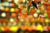 Planar 85mm 1.4 C/Y (Ney Bokeh) Tags: carlzeiss planar 85mm cy mf dof bokeh flowers