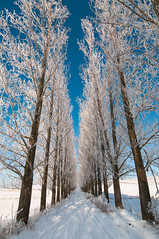 A beautiful road to walk (roger_popa) Tags: iarna winter trees copaci cersenin clearsky bluesky road drum lemnia covasna romania rogerpopa snow zapada cold ger plop plopi poplar panorama verticalpanorama