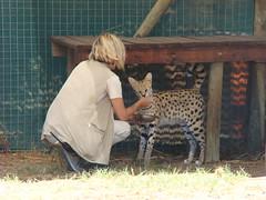 África do Sul 21-01-2017 (NR Intercâmbio) Tags: africa 20170121 capetown cheetahsanctuary lionpark