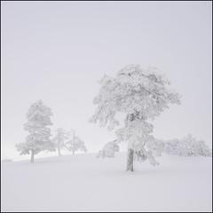 . (OverdeaR [donkey's talking monkey's nodding]) Tags: a7 sony zeiss fe 3528 winter mist fog snow soft light maljen divčibare