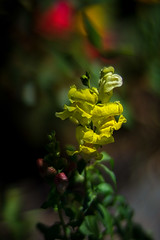 Just Another Park Flower (Thaiexpat) Tags: vacation flower color yellow america spokane bokeh 2015 a7ii