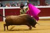 DSC_8388.jpg (josi unanue) Tags: animal blood spain bull arena bullfighter sansebastian esp toro traje asta sangre espada bullring unanue guipuzcoa matador torero tauromaquia sufrimiento cuerno banderilla banderilero