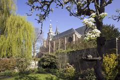 St Baafs church (wietsej) Tags: holland tree church netherlands zeiss garden sony zeeland pear 900 1635 zeeuwsvlaanderen wietse a900 jongsma stbaaf aardenburg baafschurch