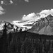 A Look Across a Forest of Trees to Crowfoot Glacier and Crowfoot Mountain (Black & White)