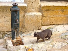 La fontaine (apolloniacyclade) Tags: fountain animal cat chat gato lane ruelle provence fontaine