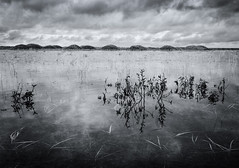 Reeds, Water and Hummocks (plndrw) Tags: blackandwhite water reeds iceland hummocks