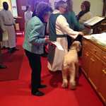 Blessing of the Animals 2015