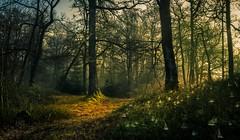 Misty Woods (GenerationX) Tags: trees mist green leaves fog sunrise landscape dawn scotland moss spring forrest unitedkingdom scottish neil calm gb trossachs spiderwebs webs barr aberfoyle lochard lochardforest