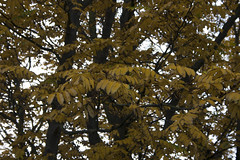 Floriade_251015_16 (Bellcaunion) Tags: park autumn fall nature zoetermeer rokkeveen florapark
