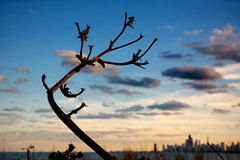 Bend Don't Break (Andy Marfia) Tags: autumn sunset brown chicago fall skyline iso100 windy lakemichigan f8 lakefront citiscape 1320sec montrosepointbirdsanctuary d7100 1685mm