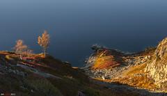 Red and yellow morning mood... (bent inge) Tags: autumn fall norway telemark haukeli vinje haukelifjell autumnturnstowinter bentingeask