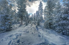 (Daswikinger) Tags: trees winter snow cold colorado pines christmastrees christmastreecutting xmad anawesomeshot flickrunitedaward dasviking daswikinger seeninaclassgroup trademarkchrisharlanphotography2015