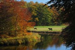 Horse Meadow II (EP Diederiks) Tags: autumn horse holland tree fall water colors herfst nederland boom groeneveld kasteel paard baarn kleuren