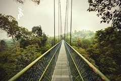 MacRitchie Reservoir Park Treetop Walkway (Dance while the record spins....) Tags: bridge singapore naturepark macritchie treetop treetopwalkway forestwalkway
