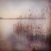 Songs of color (Joylelies) Tags: kralingseplas waterschape tree