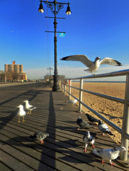 These Wings Are Made for Walking (Robert S. Photography) Tags: birds boardwalk gulls pigeons metal railing walking wings scene winter lamp sand building brooklyn brightonbeach coneyisland nyc nikon color coolpix l340 iso80 december 2016