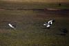 IMG_3652 (FelipeDiazCelery) Tags: sanpedro sanpedroatacama sanpedrodeatacama desierto altiplano atacama andes chile fauna aves valledelaluna