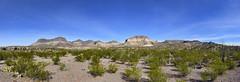 Chihuahuan Desert Panorama