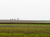 NovemberLight.jpg (Klaus Ressmann) Tags: klaus ressmann omd em1 autumn fpons field landscape vineyard flcnat softtones trees klausressmann omdem1
