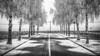 Which way (Tintin44 - Sylvain Masson) Tags: 1erjanvier sèvrenantaise filélectrique arbre froid givre graphique hiver k3 pentax route tamron1750 lahaiefouassière paysdelaloire france fr