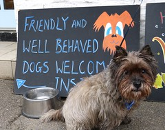 outside the café (quietpurplehaze07) Tags: jinks cairnterrier café sign welcome cornwall