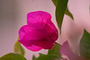 mazatlan simple belleza (Sýnthes!s Fotografía) Tags: mazatlan naturaleza flores acuario